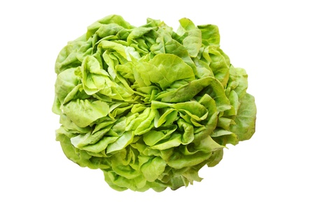 Fresh lettuce Lollo isolated on white background photo