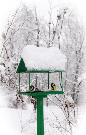 frigid: bird feeders in the winter snow-covered park Stock Photo