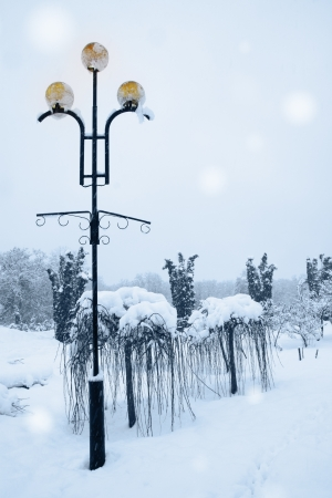 Decorative lamp beside the weeping willow in the park photo
