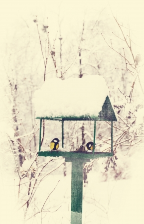 bird feeders in the winter snow-covered park photo