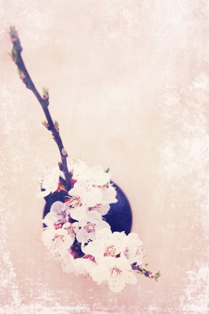 spring bouquet of blooming apricot top view, vintage photo