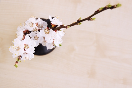 spring bouquet of blooming apricot top view photo