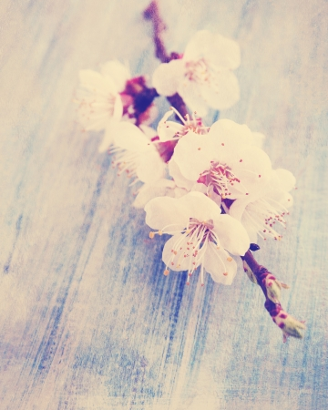 spring bouquet of blooming apricot, vintage photo photo