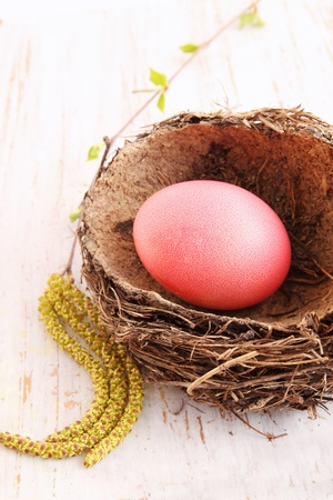 Big red egg in a nest on a white board photo