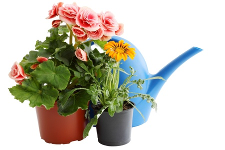 blue watering can and two flowers in pots photo