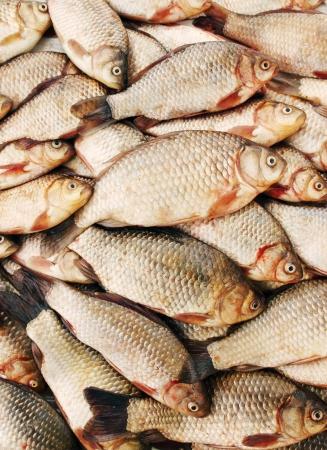 river fish: river fish carp on a white background