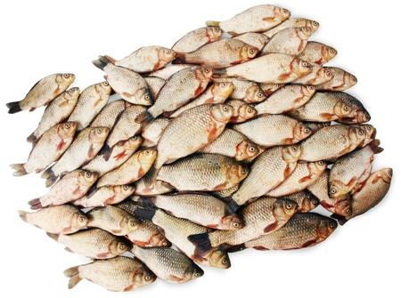 river fish carp on a white background photo