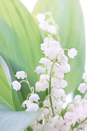 small bouquet of delicate spring lilies, tinted Stock Photo - 20164793