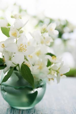 jasmine bush: Fragrant jasmine bouquet in a vase on the table