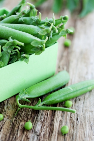 sweet sugar snap: young fresh juicy pods of green peas