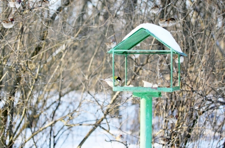 Feeder for wild birds in the park photo