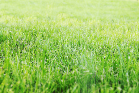 Juicy spring sheared lawn, horizontal background photo