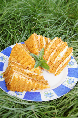 honey cake on a plate with mint in the garden photo