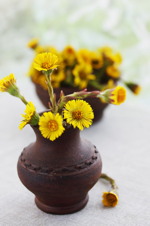 Flowers coltsfoot in ware pottery handmade photo