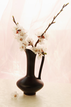 blooming branch apricot with flowers in a vase  photo