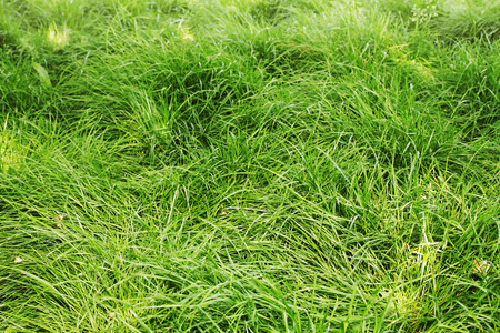 Juicy spring not sheared lawn, horizontal background photo