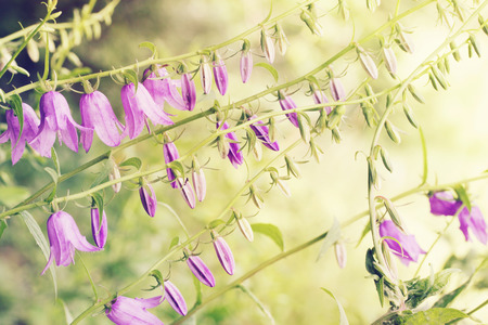 purple bell flower in the field, tinted Stock Photo - 27397461