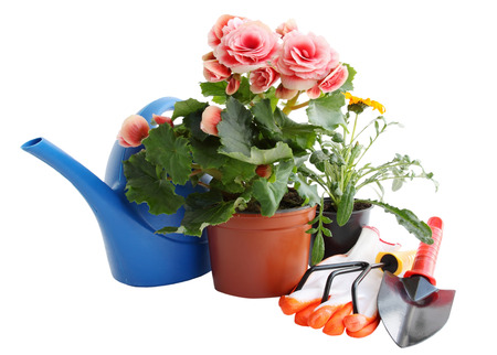 garden tools and flowers for planting in flower beds Reklamní fotografie