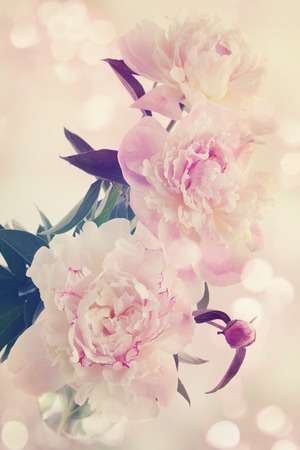 Pink peonies in a vase, old photo, tinted photo