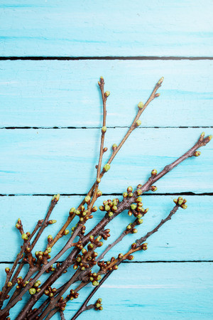 cherry branches with buds on a wooden background photo