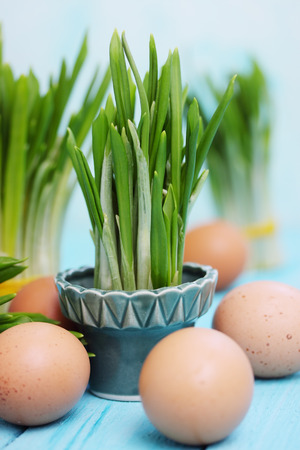 Bunches of ramson and boiled eggs for spring salad photo