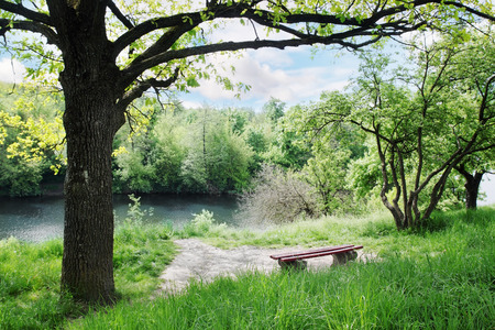 Spring Landscape. Bench under a tree by the river photo