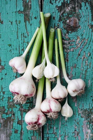 Fresh garlic on a wooden board painted Stockfoto