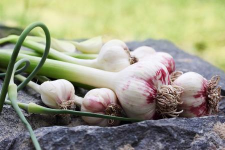 garlic: Fresh garlic on a wooden board painted Stock Photo