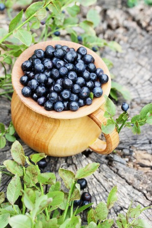 blackberry bush: Forest blueberries in a large, wooden bowl