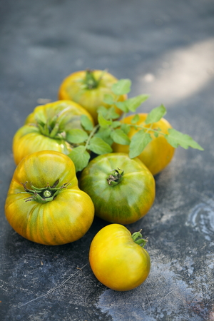 varieties: Big ripe green tomatoes varieties emerald apple