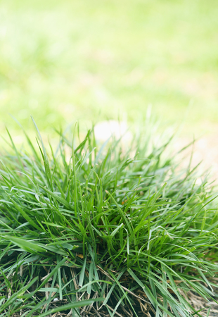 bush to grow up: Bush juicy green grass in the spring, close-up Stock Photo