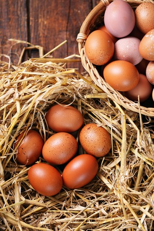 organic eggs in nest, tinted