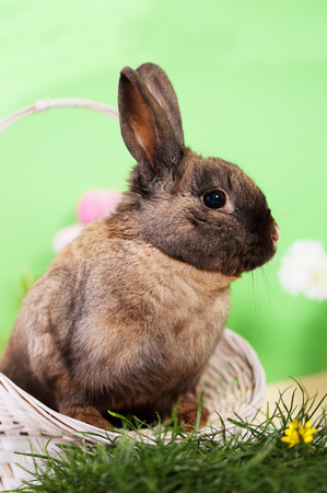 bunny in a basket Stock Photo