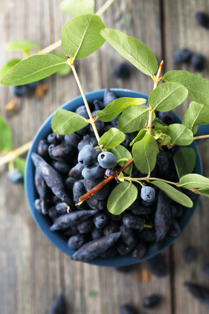 berry honeysuckle in a cup Stock Photo