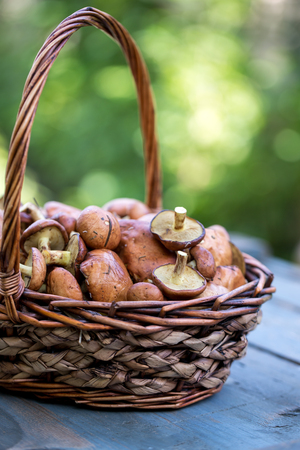 Large basket with forest mushrooms Stock Photo