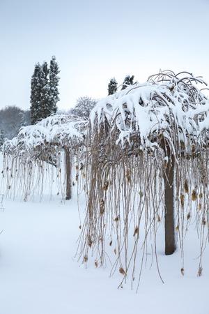 Beautiful winter snowy landscape in the park