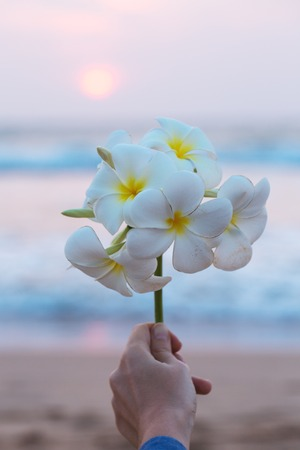 Beautiful branch with flowers plumeria in a female hand