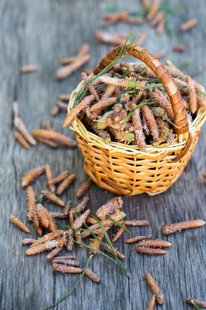pine buds in a basket