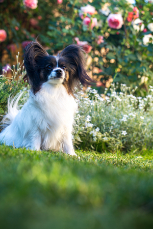 Pensive doggie on the lawn