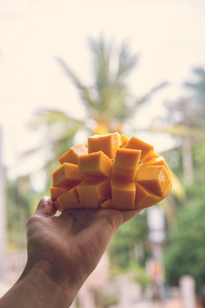 Juicy, ripe mango in hand on a palm tree background