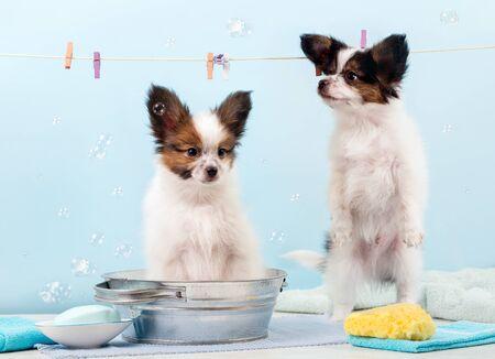 Bathing puppies in the pelvis Stockfoto