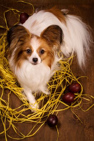 The dog is guarding the eggs. Easter concept