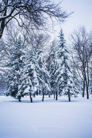 Paisaje de invierno en un parque de la ciudad en un día de nieve