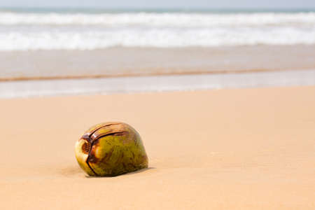 Big coconut by the ocean, summer background