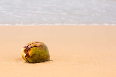 Big coconut on the sand by the ocean, summer background