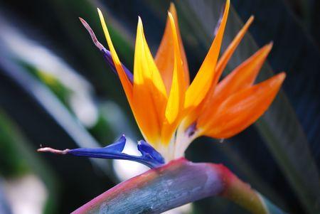 Orange Flower Banco de Imagens - 6953467
