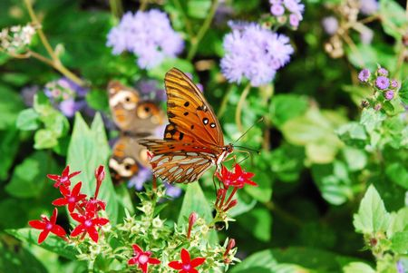 Butterfly Climbing on Flowers