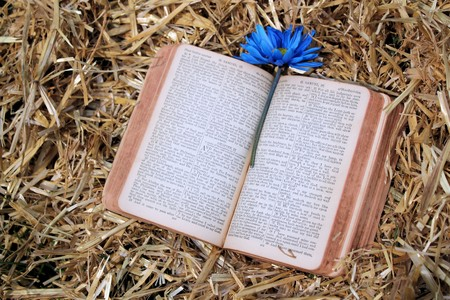 Old Bible With Flower Resting in Hay Stok Fotoğraf