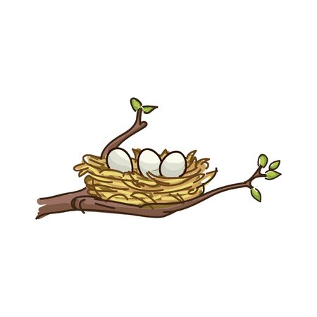 nest with eggs on a tree branch