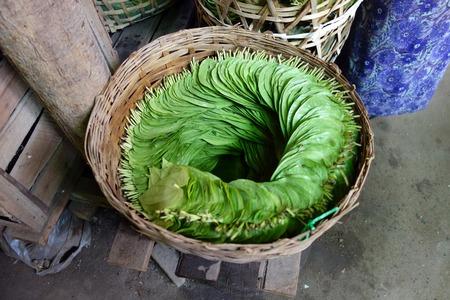 betel leaves, Myanmar